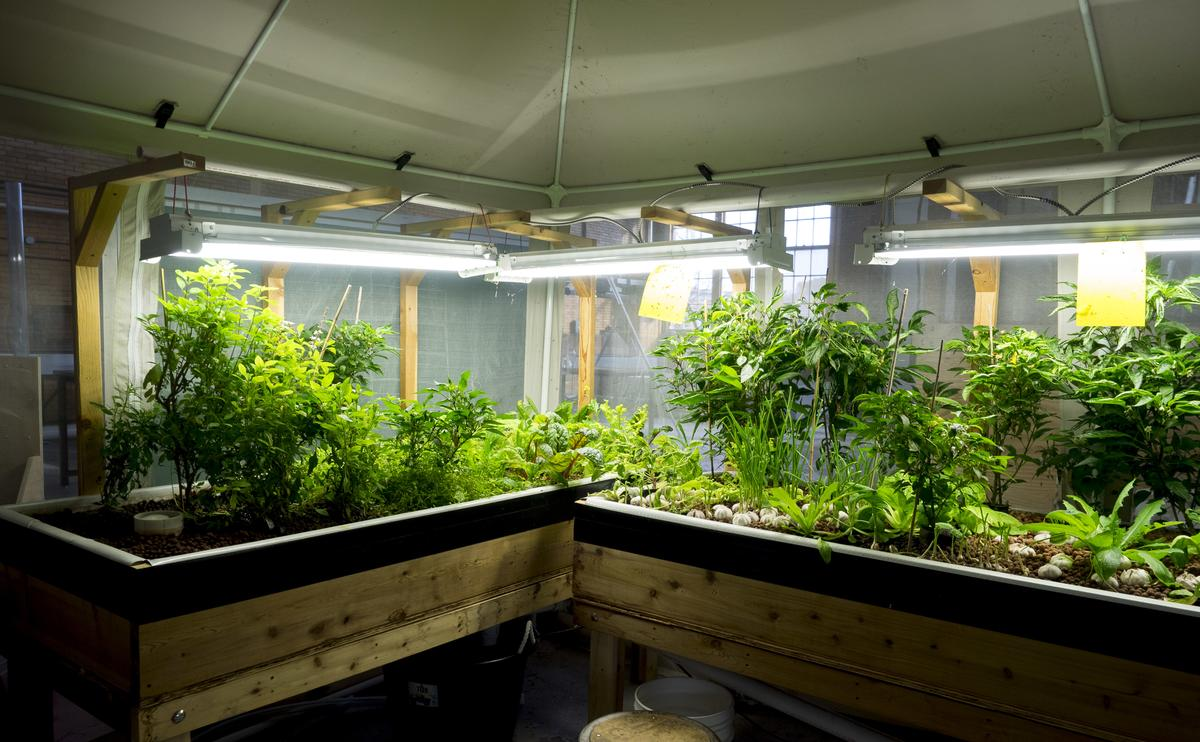 Aquaponic system - vegetable bed